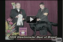James wins BOB and Group 4 at 2009 Westminster Show